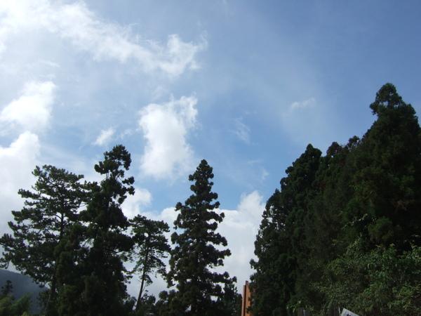 藍藍的天空配上綠綠的樹