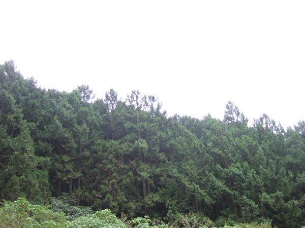 綠油油的森林