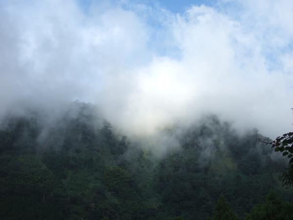 樹林響徹雲霄