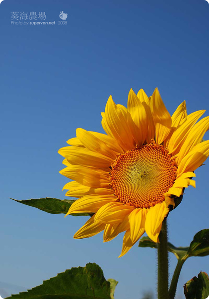 flower_4.jpg