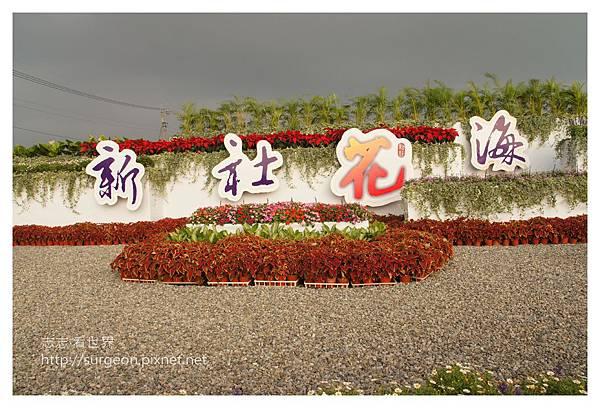 《台中》新社花海暨台中國際花毯節 (6).JPG