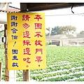《台南》善化小新營草莓園 (2).JPG