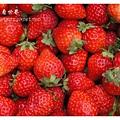 《台南》善化小新營草莓園 (22).JPG
