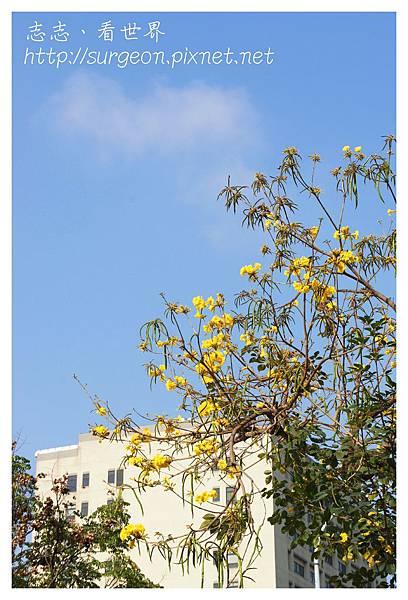 《台南》東豐路木棉道 (1)
