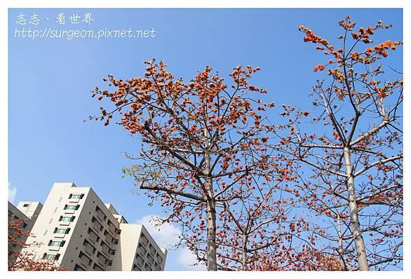 《台南》東豐路木棉道 (2)
