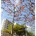 《台南》東豐路木棉道 (3)