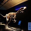 《台北》最古老的恐龍展 (6)