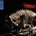 《台北》最古老的恐龍展 (8)