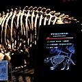 《台北》最古老的恐龍展 (10)