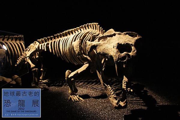 《台北》最古老的恐龍展 (12)