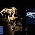 《台北》最古老的恐龍展 (13)