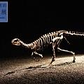 《台北》最古老的恐龍展 (15)
