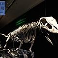 《台北》最古老的恐龍展 (16)