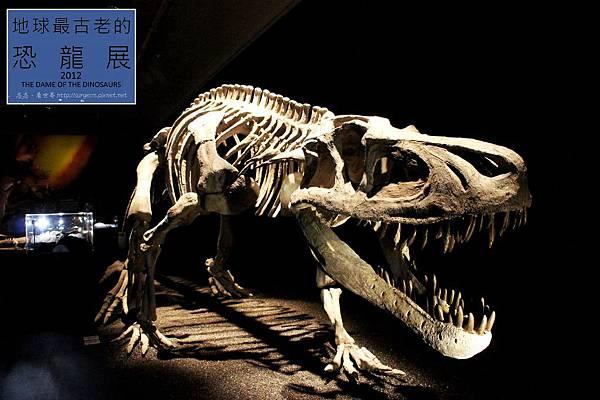 《台北》最古老的恐龍展 (17)