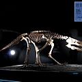 《台北》最古老的恐龍展 (19)