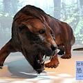《台北》最古老的恐龍展 (20)