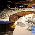 《台北》最古老的恐龍展 (22)