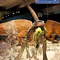 《台北》最古老的恐龍展 (26)