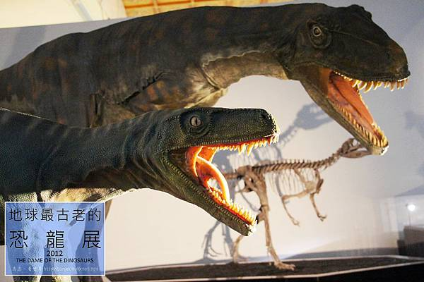 《台北》最古老的恐龍展 (30)