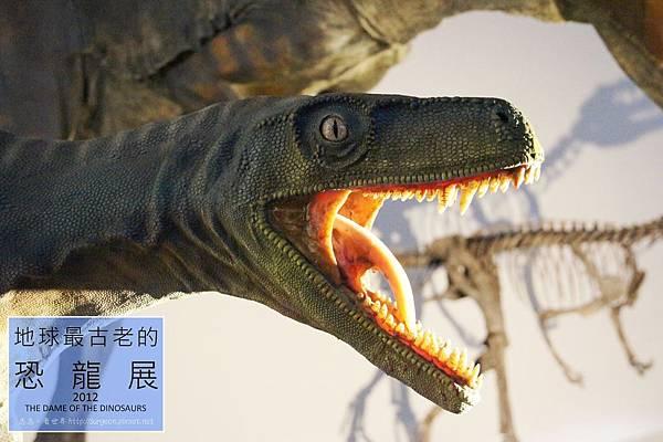《台北》最古老的恐龍展 (31)