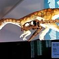 《台北》最古老的恐龍展 (36)