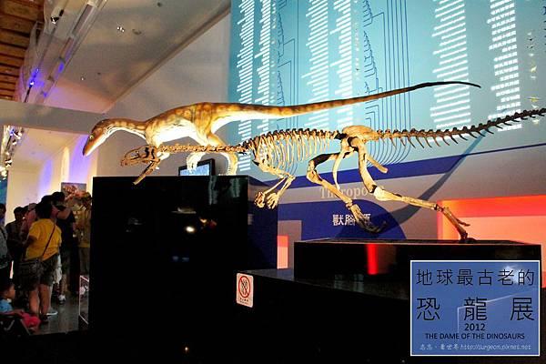 《台北》最古老的恐龍展 (37)