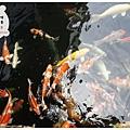 《台南》覓秘 咖啡 輕食 簡餐 火鍋 (12)