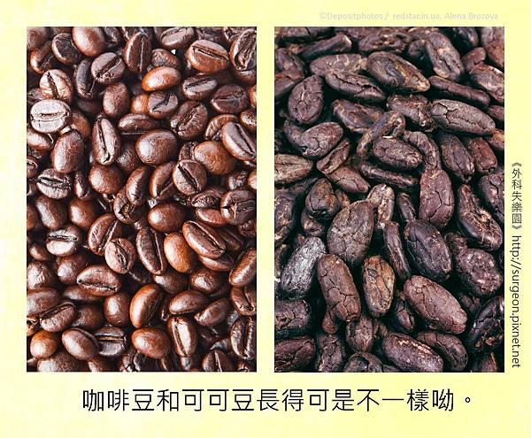 咖啡豆和可可豆長得可是不一樣呦。