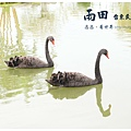 《台東》雨田民宿 景觀 (9)