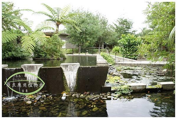 《台東》原生應用植物園 養生鍋 (22)
