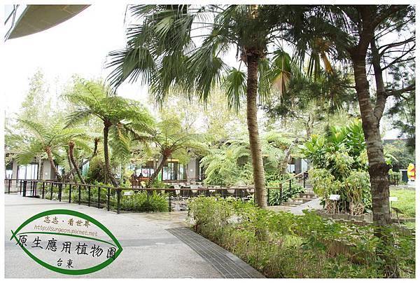 《台東》原生應用植物園 養生鍋 (23)