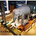 《台東》台灣史前文化博物館 (9)