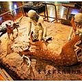 《台東》台灣史前文化博物館 (17)