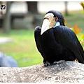 《台南》頑皮世界 動物園 (1)
