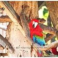 《台南》頑皮世界 動物園 (3)