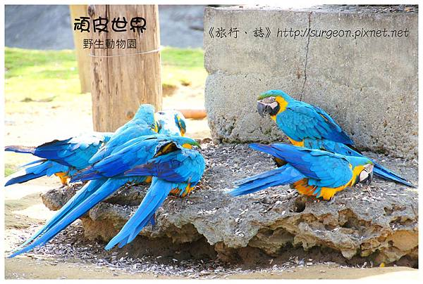 《台南》頑皮世界 動物園 (5)