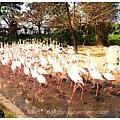 《台南》頑皮世界 動物園 (6)