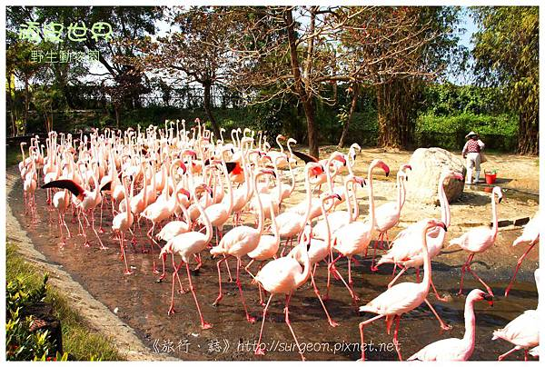 《台南》頑皮世界 動物園 (7)