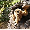 《台南》頑皮世界 動物園 (8)