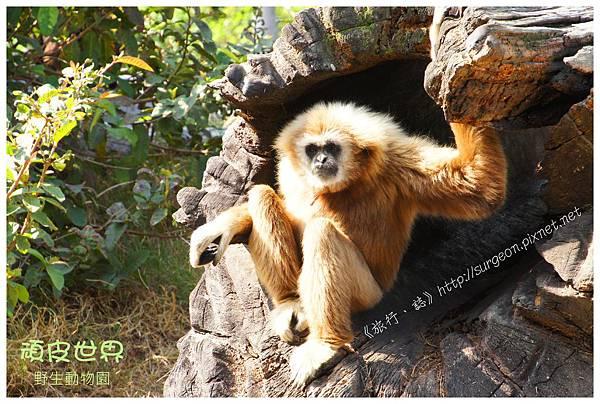 《台南》頑皮世界 動物園 (9)