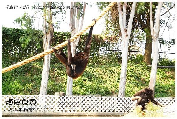 《台南》頑皮世界 動物園 (10)