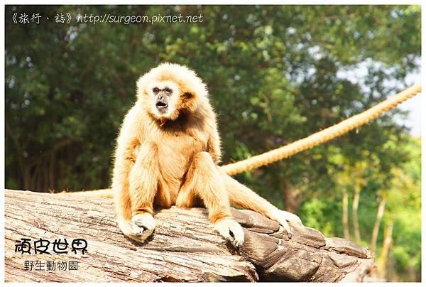 《台南》頑皮世界 動物園 (11)