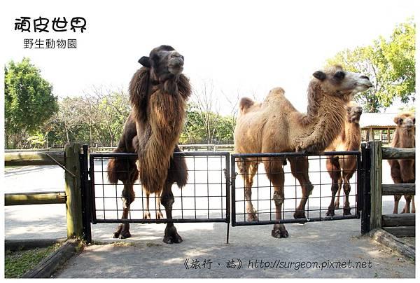 《台南》頑皮世界 動物園 (12)