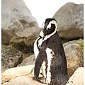 《台南》頑皮世界 動物園 (14)