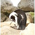 《台南》頑皮世界 動物園 (15)