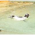 《台南》頑皮世界 動物園 (16)
