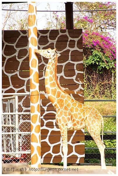 《台南》頑皮世界 動物園 (18)