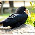 《台南》頑皮世界 動物園 (19)