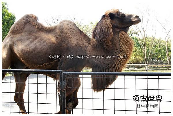 《台南》頑皮世界 動物園 (13)