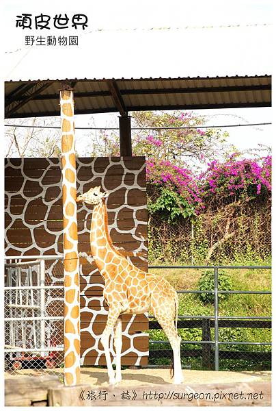 《台南》頑皮世界 動物園 (17)